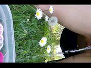 Pisciatina sulle margherite in giardino